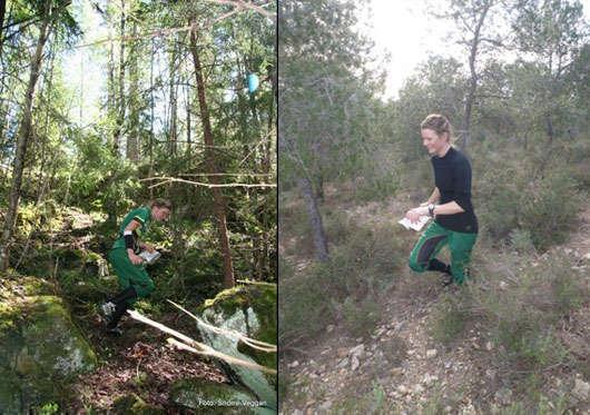 Orientering i en härlig skog.