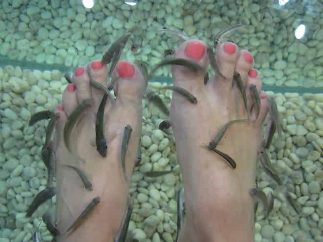 Fiskmassage i Thailand.