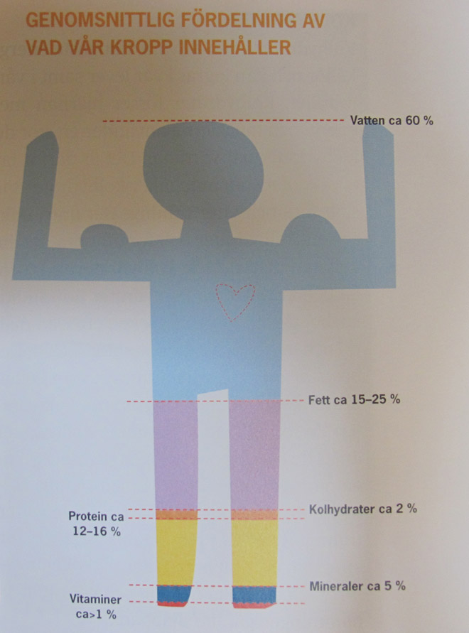 Illustration från boken.