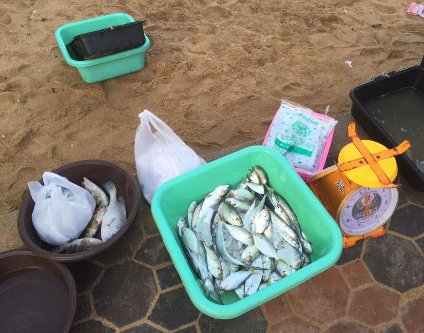 fisk i Thailand