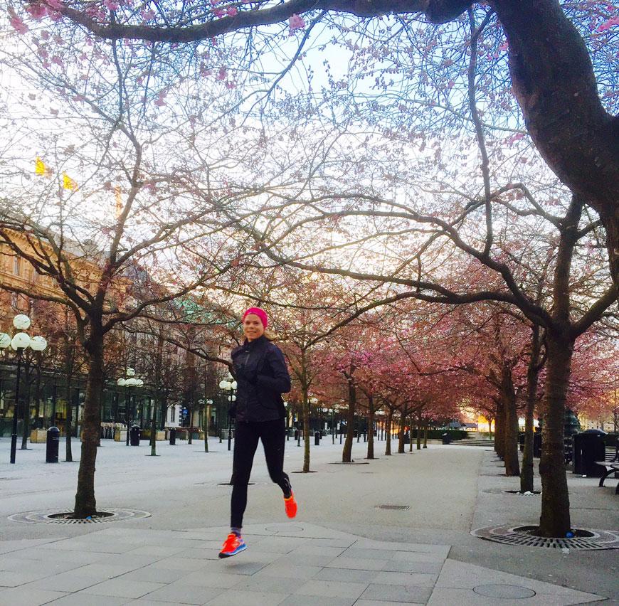körsbärsblommor kungsträdgården