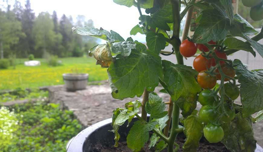 Odla köksträdgård