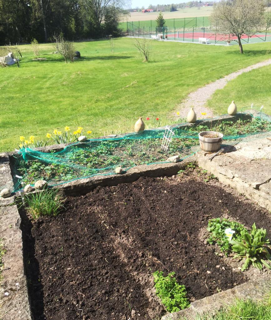 Köksträdgård – sättning av potatis, betor och bärbuskar